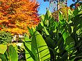 Botanička bašta Jevremovac, Beograd, jesenje boje, svetlost i senke 13.jpg