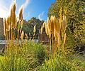 Botanička bašta Jevremovac, Beograd - jesenje boje, svetlost i senke 43.jpg