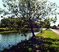 Bouchain.- Le Bassin Rond (3).jpg