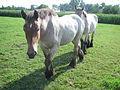 Brabants Trekpaard Stappend Opwijk 2014.JPG