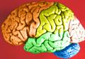 Brain - Lobes.png