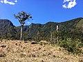 Brasil Rural - panoramio (28).jpg