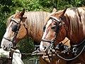 Breton horse head at Comper (2).jpg