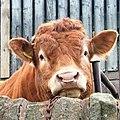 Bull, Ridley - geograph.org.uk - 169805 (cropped).jpg