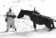 Bundesarchiv Bild 101I-215-0366-03A, Russland, Soldat, Pferd im Winter