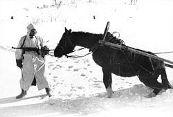 Deutsch-Sowjetischer Krieg, Panjepferd in verschneiter Landschaft