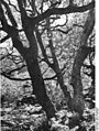 Bundesarchiv Bild 135-KA-03-025, Tibetexpedition, Wald.jpg