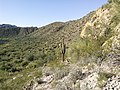 Butcher Jones Trail - Mt. Pinter Loop Trail, Saguaro Lake - panoramio (139).jpg