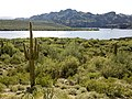 Butcher Jones Trail - Mt. Pinter Loop Trail, Saguaro Lake - panoramio (141).jpg
