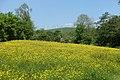 Buttercup meadow carsington.jpg