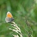 Butterfly (34651595360).jpg