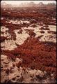 CALIFORNIA-PEBBLE BEACH - NARA - 543188.tif
