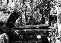 COLLECTIE TROPENMUSEUM Ruïne in het bos bij de rubber- en theeplantage Goenoeng Manik omgeving Lampegan TMnr 60016454.jpg