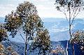 CSIRO ScienceImage 431 Australian Native Forest.jpg