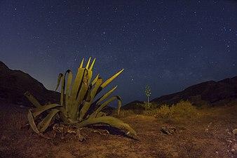 Cabo de Gata Nocturna 1.jpg