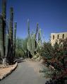 Cacti and flowers, Tucson, Arizona LCCN2011633837.tif