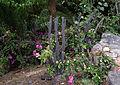 Cactus et autres plantes.jpg
