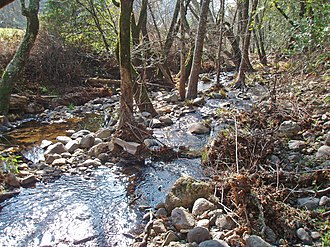 Calabazas Creek (Sonoma County) - Riparian zone habitat of upper Calabazas Creek.