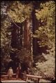 California - Colwell Redwood State Park - NARA - 543490.tif