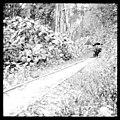 Cana River Road (3608380286).jpg