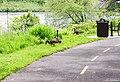 Canada goose (34807125922).jpg