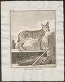 Canis lupus familiaris - 1700-1880 - Print - Iconographia Zoologica - Special Collections University of Amsterdam - UBA01 IZ22200011.tif