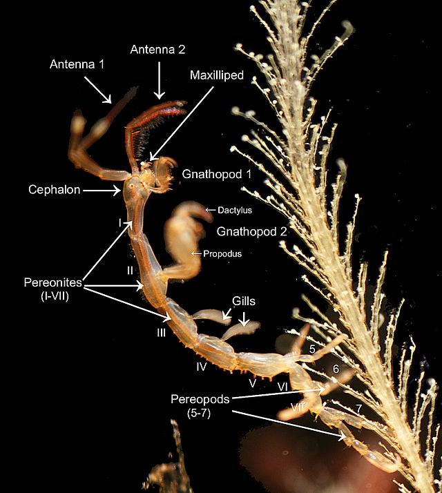 Morphologie (Biologie) - Wikiwand
