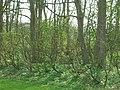 Carr Lane Plantation - geograph.org.uk - 1256545.jpg