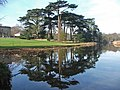 Cedar Reflections at Attingham - geograph.org.uk - 864679.jpg