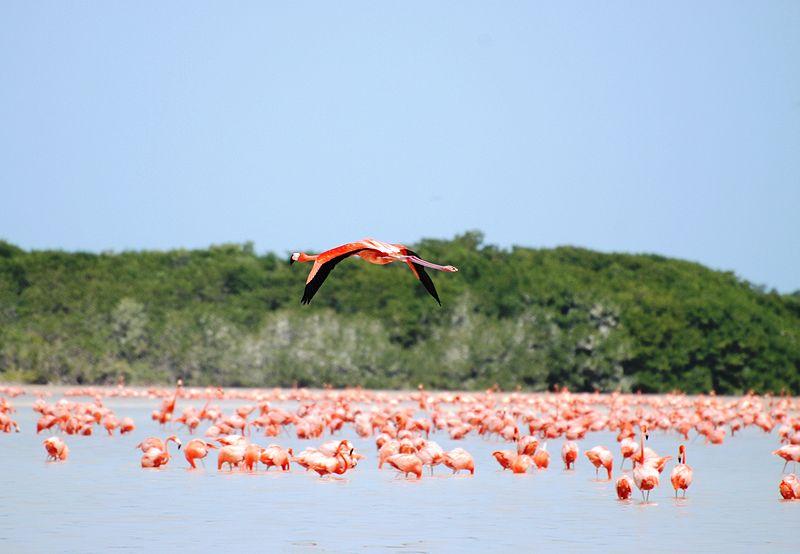 Pinkes Meer der Flamingokolonie, Bild: Elelicht