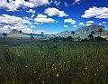 Cerrado landscape.jpg