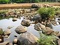 Chalakudy River @ Ezhattumukam - panoramio (3).jpg