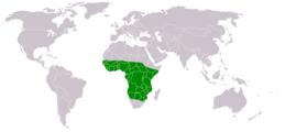 Chalcomitra senegalensis distribution map