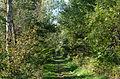 Chemin en bordure de forêt- Dosenmoor.jpg