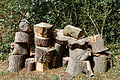 Churchyard log stack Henham Essex England.jpg