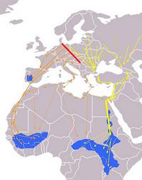 Ciconia nigra Eurasian Migration.png