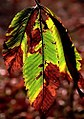 """Cincinnati - Spring Grove Cemetery & Arboretum """"Autumn Change"""" (5024067044).jpg"""