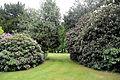 City of London Cemetery - flowering shrubs 18.jpg