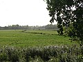Claxton Marshes - geograph.org.uk - 1552553.jpg