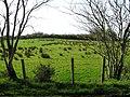 Cloghfin Townland - geograph.org.uk - 1200523.jpg