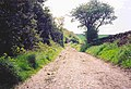 Codlaw Hill - old Roman Military Road - geograph.org.uk - 274228.jpg