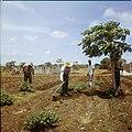 Collectie Nationaal Museum van Wereldculturen TM-20029718 Landarbeiders bewerken de grond op Plantage Aruba Bonaire Boy Lawson (Fotograaf).jpg