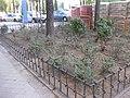 Comienza la segunda fase de rehabilitación de las zonas verdes del Parque de las Avenidas 04.jpg