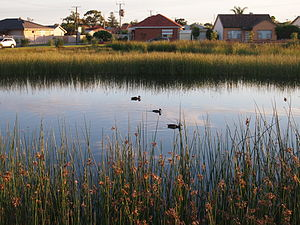 Aquifer storage and recovery - Image: Cooke Reserve wetland