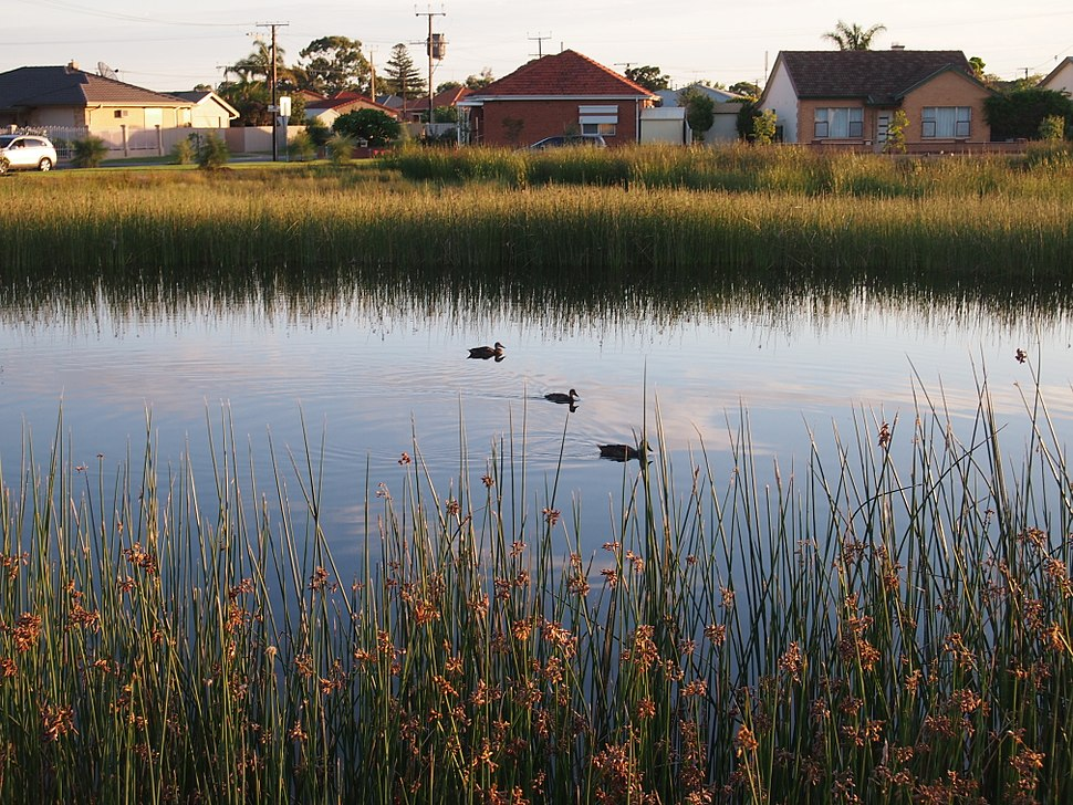 Cooke Reserve wetland