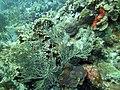 Coral Scene 4 (7342728186).jpg