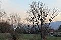 Coucher de soleil sur Cologny - panoramio (6).jpg