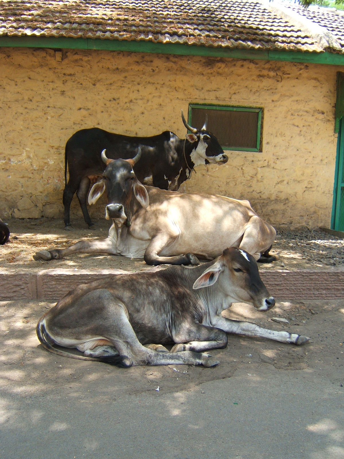 animal husbandry in