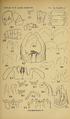 Craspedosomatidae of North America 1895 Plate III.png