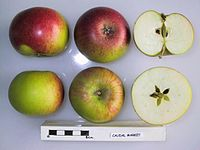Cross section of Caudal Market, National Fruit Collection (acc. 1953-104).jpg